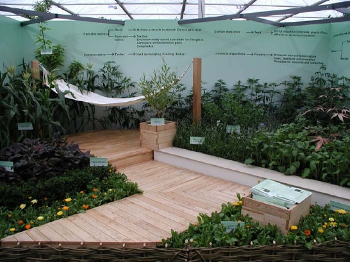 Cannabis in SEEDA Garden